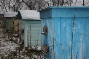 Пчелиные дома