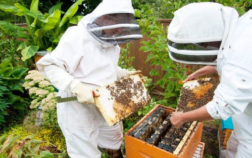 Медовый мед